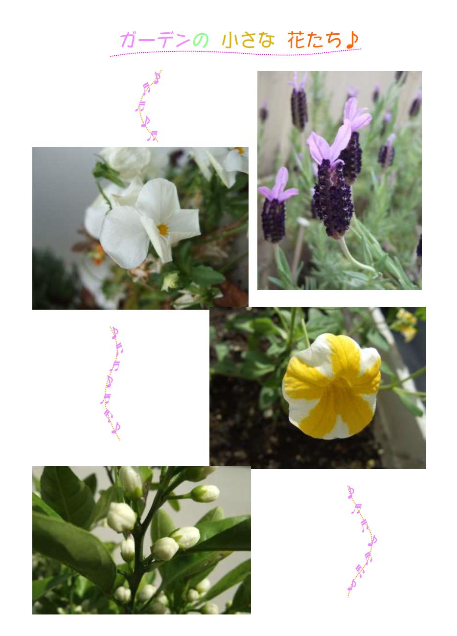 Spring2016-4syusei