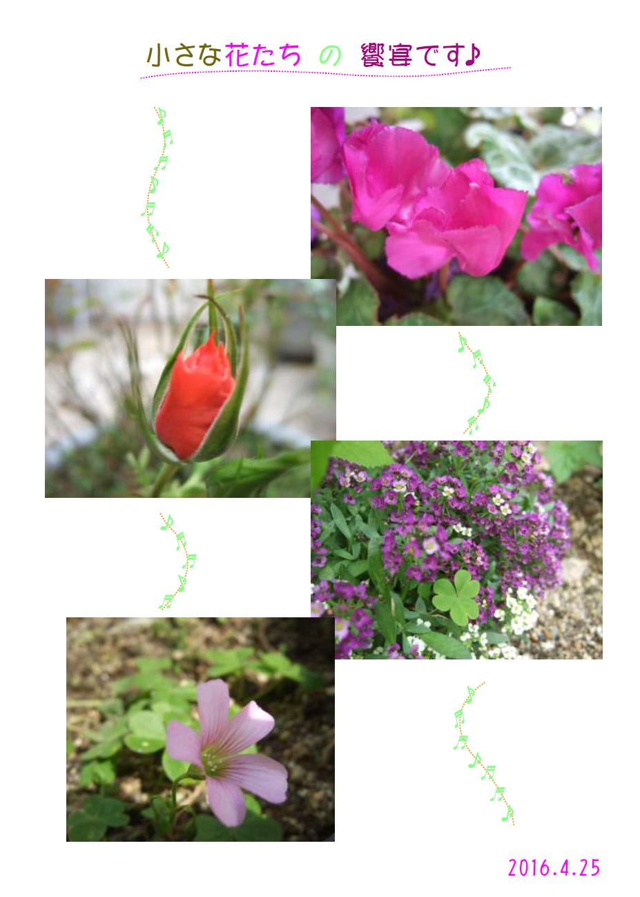 Spring2016-5syusei