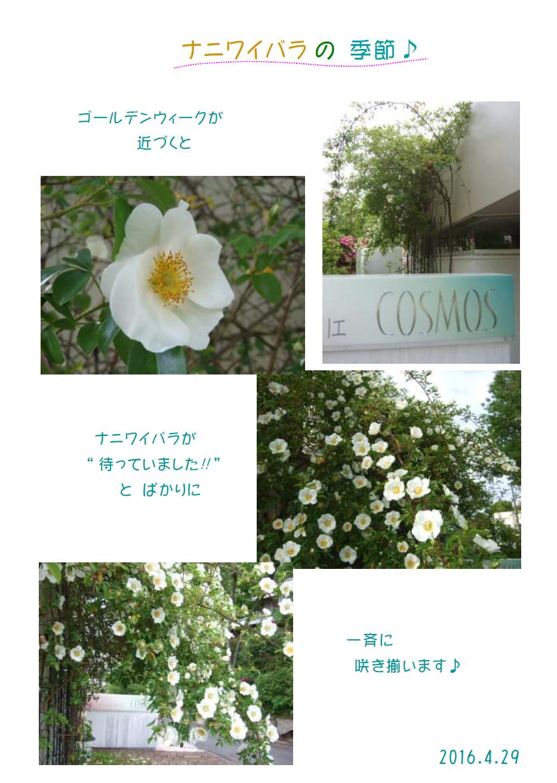 Spring2016-6
